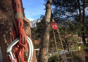 Tala de pins al Bruc residencial