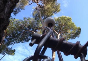 Tala de pins a Gavà