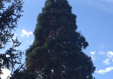 Intervenció en sequoya partida per un llam